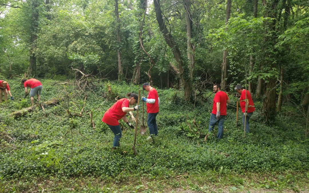 Volunteers Drive Improvements to Imago's Nature Preserve