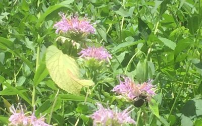 A Visual Tour of Butterfly Garden