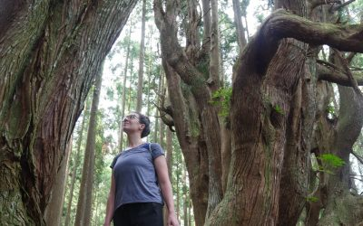 Pilgrimage through Ancient Forest: a travelogue from Amy Tuttle