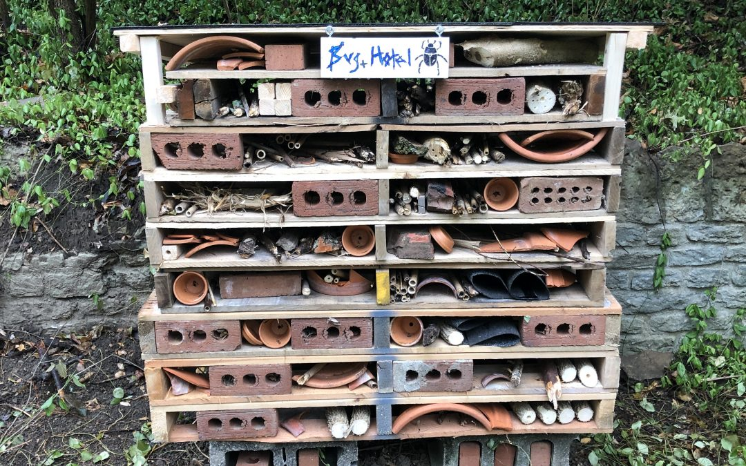Lots of Rooms to Fill in our New Bug Hotels