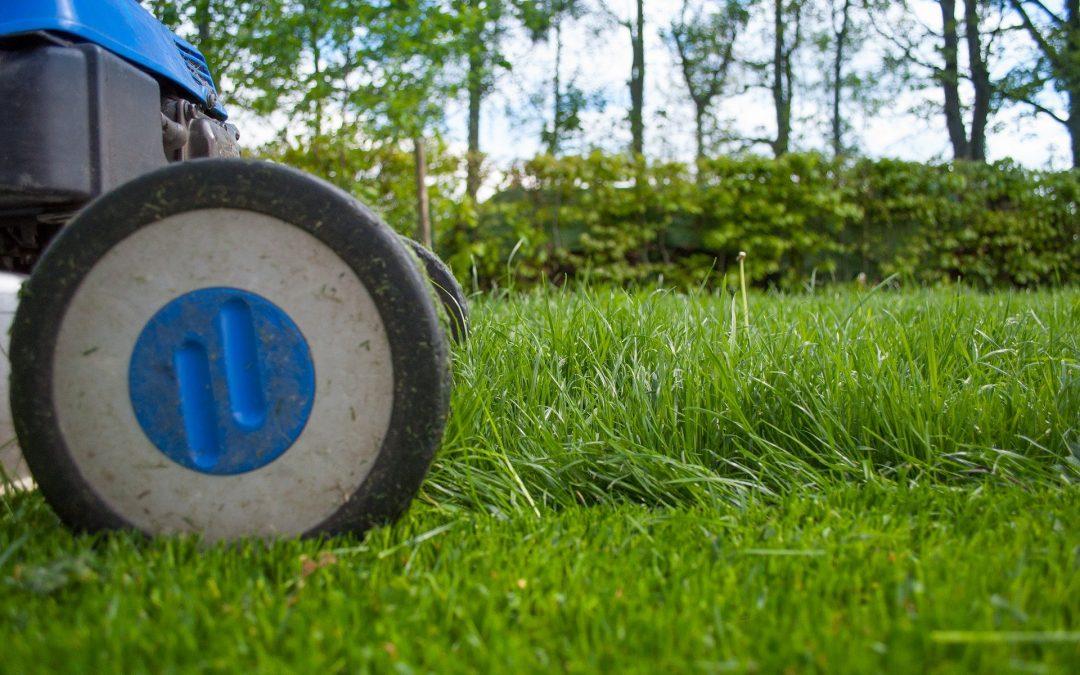 Lawns: Is grass always greener?