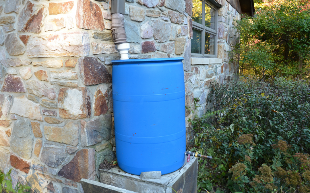 Rain Check: Catching Rainwater with a Rain Barrel