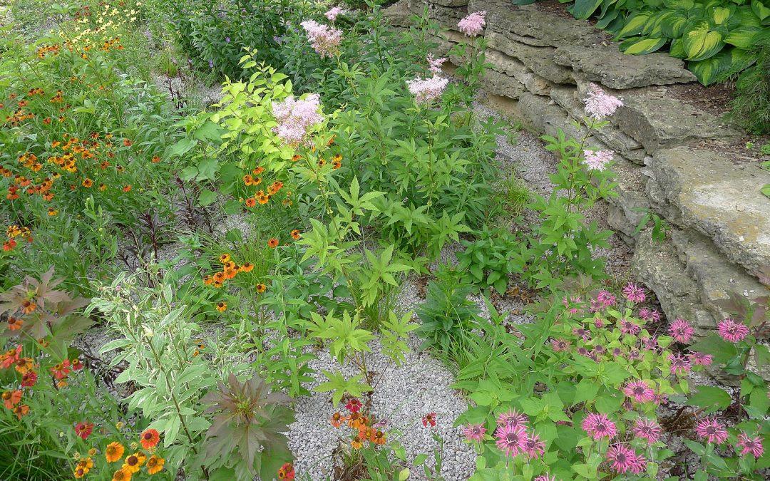 Rain Check: How to manage Rainwater with a Rain Garden