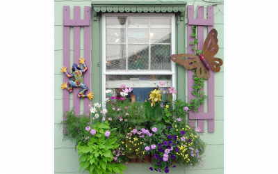 No yard? No problem! Welcoming Wildlife to small outdoor spaces