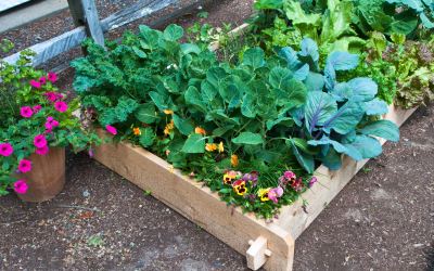 Pesticide-free Gardening?